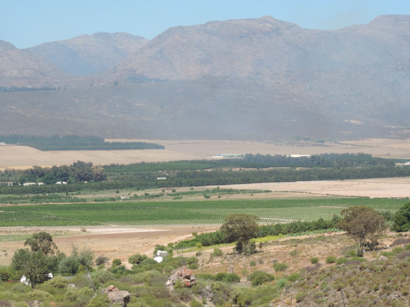 Citrusdal citrus orchards.JPG