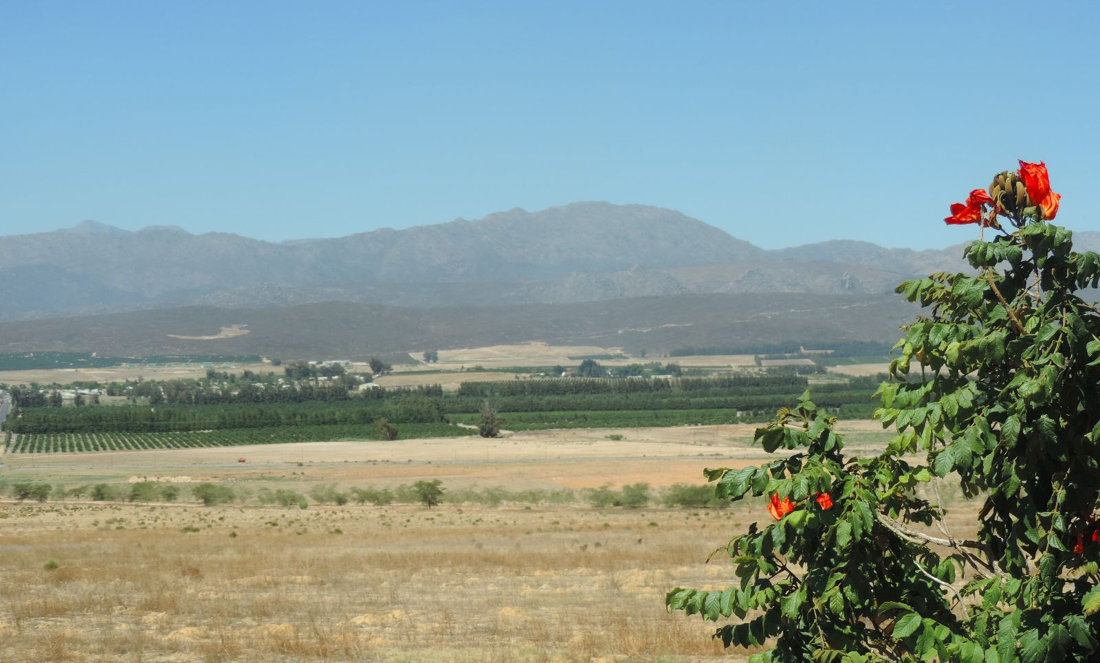 Citrusdal valley.JPG